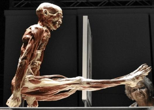 Torino, mostra human body