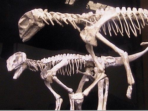 Museo di Scienze naturali di Torino