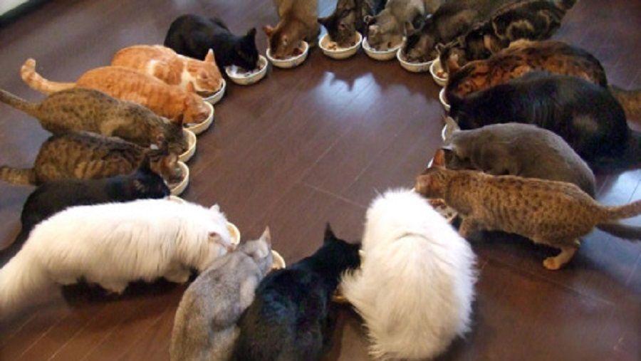 gatti, foto maybepress