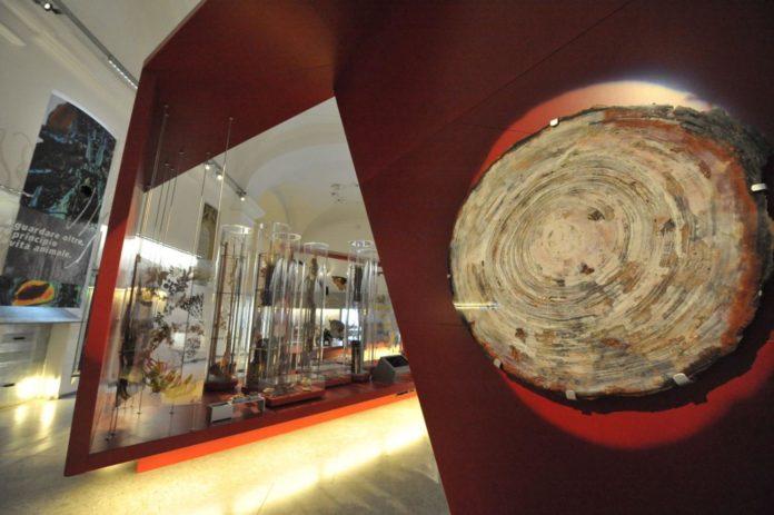 Museo Regionale di Scienze Naturali di Torino