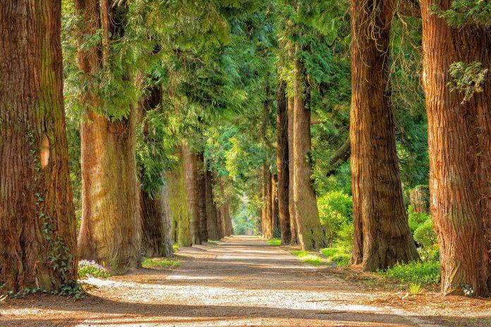 Torino abbattuto ippocastano centenario albero pericolante